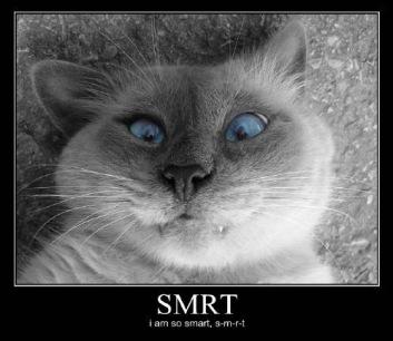 Cat smart