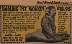 squirrel_monkey2