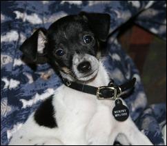 Murphy pup
