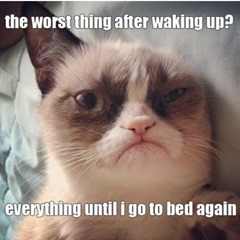 Grumpy-Cat-Waking-Up